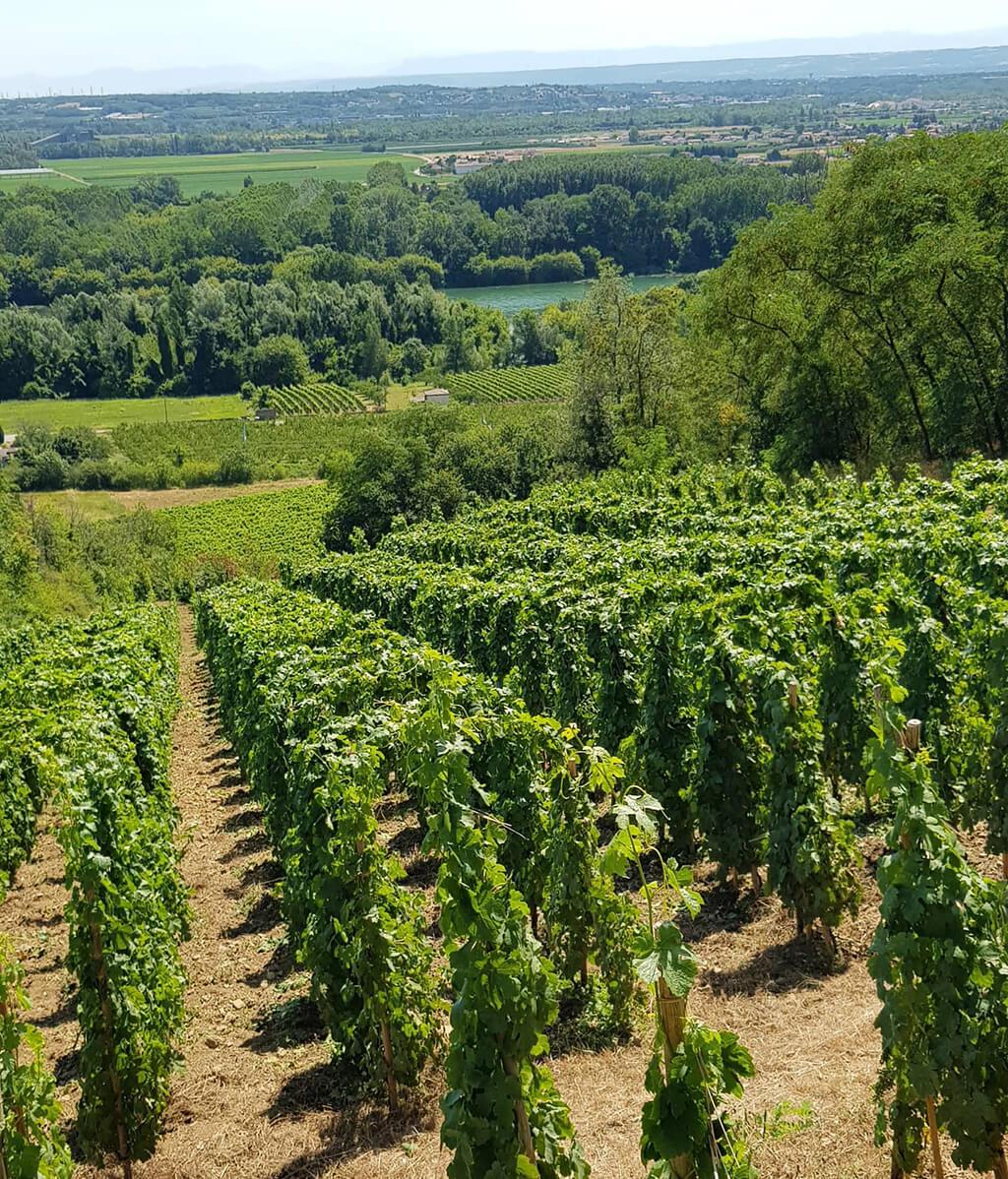 Domaine Eymin-Tichoux, Vignoble de Seyssuel